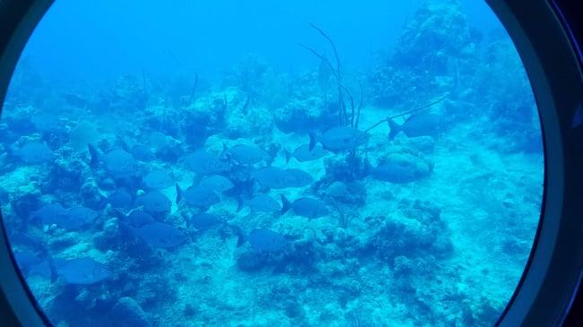 cayman submarine